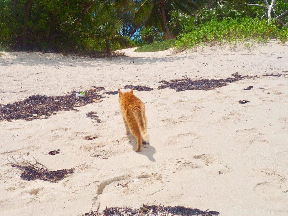 Sailing Life Day 33: Maundy Thursday in George Town, Exumas, Bahamas