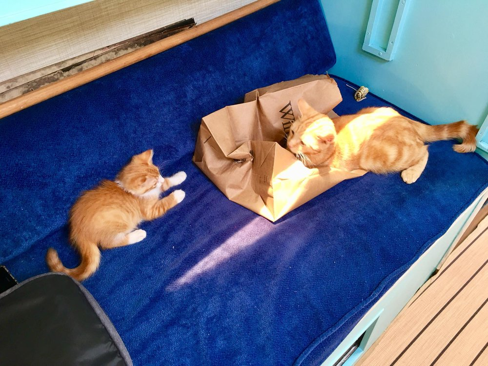 Sailing Life Day 63: - Whole day on our sailboat, Empress, with 2 kittens - Captain Ahab The Sailor Cat and Ishi (Ishmael) The Sea Cat 🐈