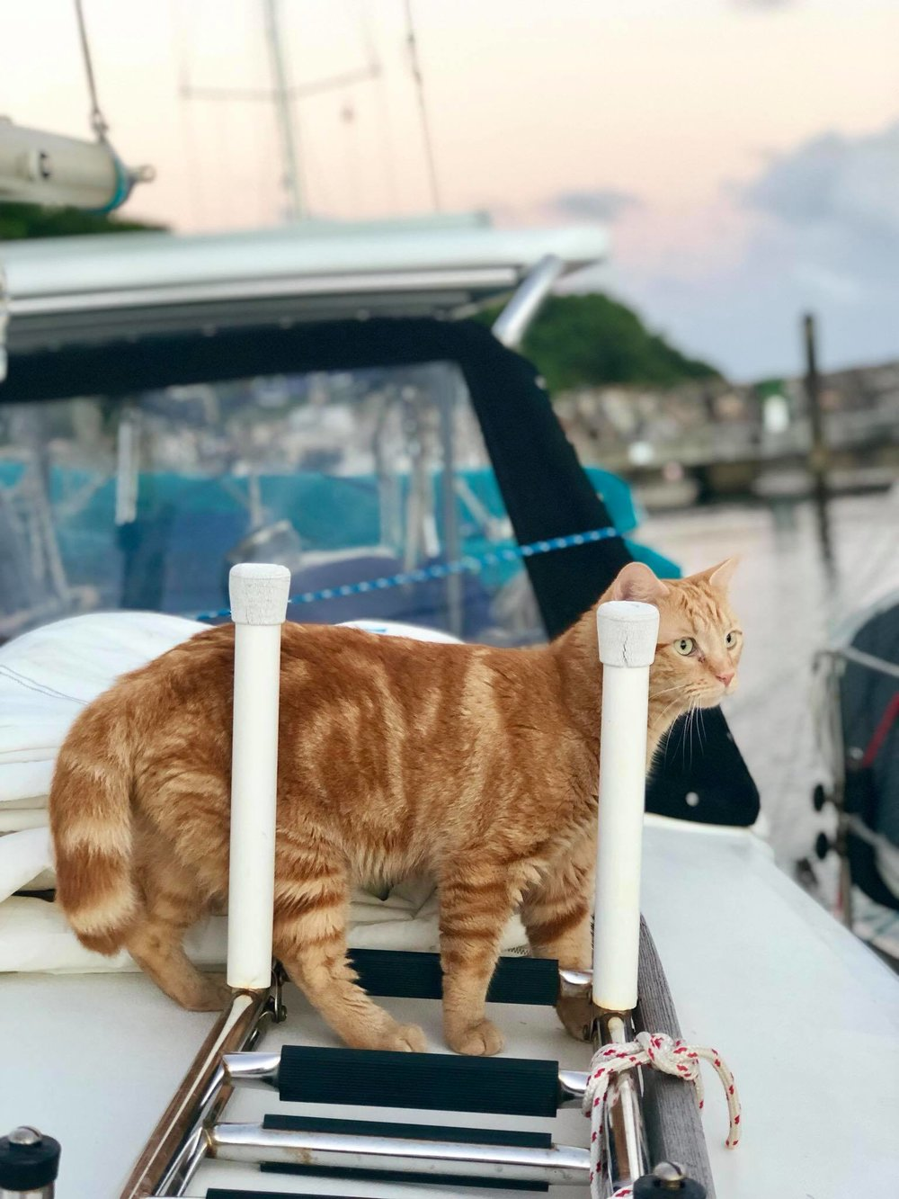 Sailing Life Day 294 Back to marina life2.jpg
