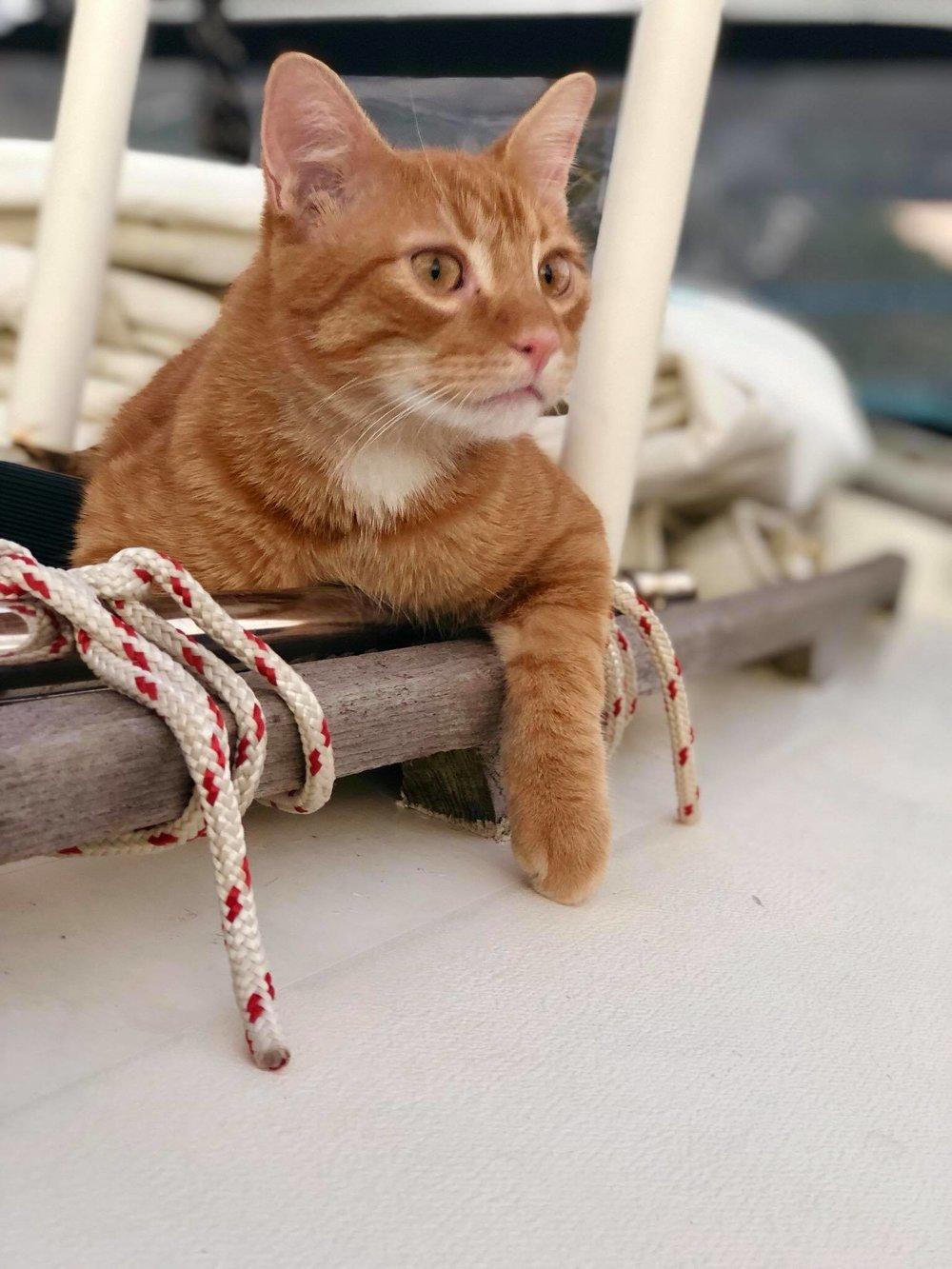 Sailing Life Day 294 Back to marina life7.jpg