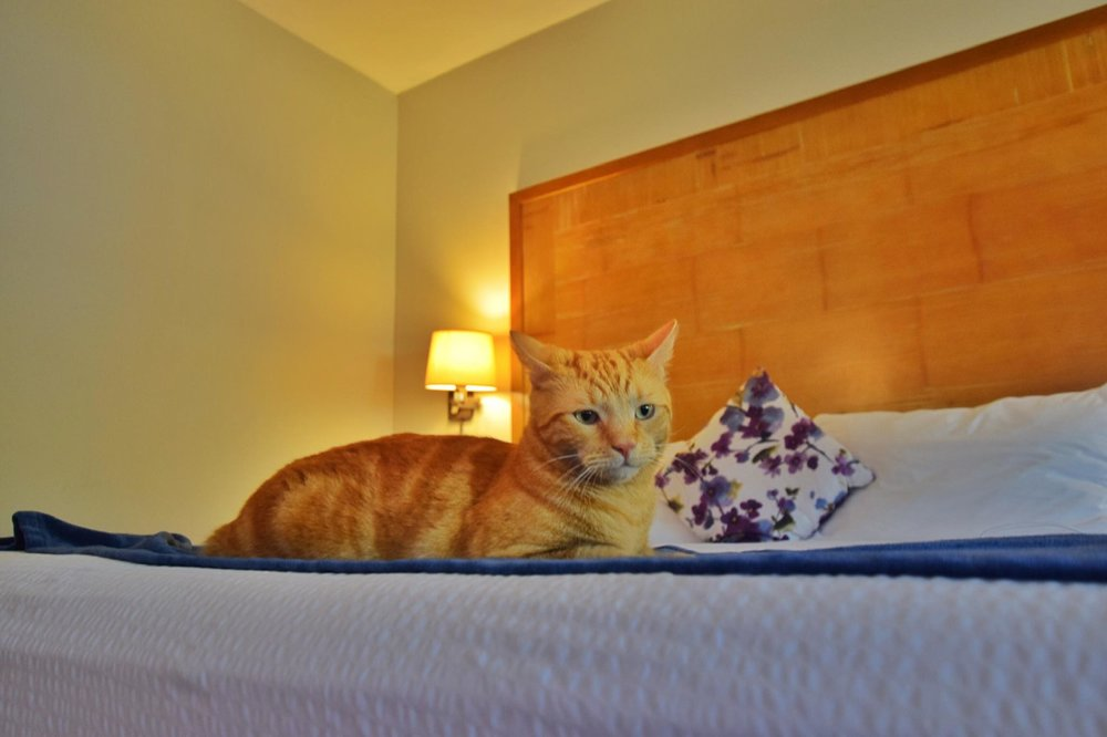 Sailing Life Day 322 Hotel Life of The Sailors Cats - Captain Ahab & Little Zissou's Luxury Staycation.jpg