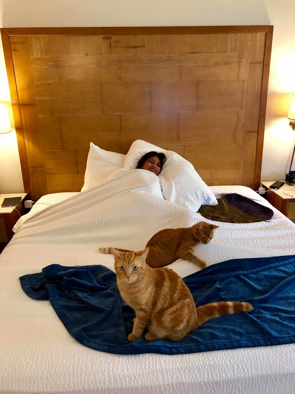 Sailing Life Day 322 Hotel Life of The Sailors Cats - Captain Ahab & Little Zissou's Luxury Staycation3.jpg