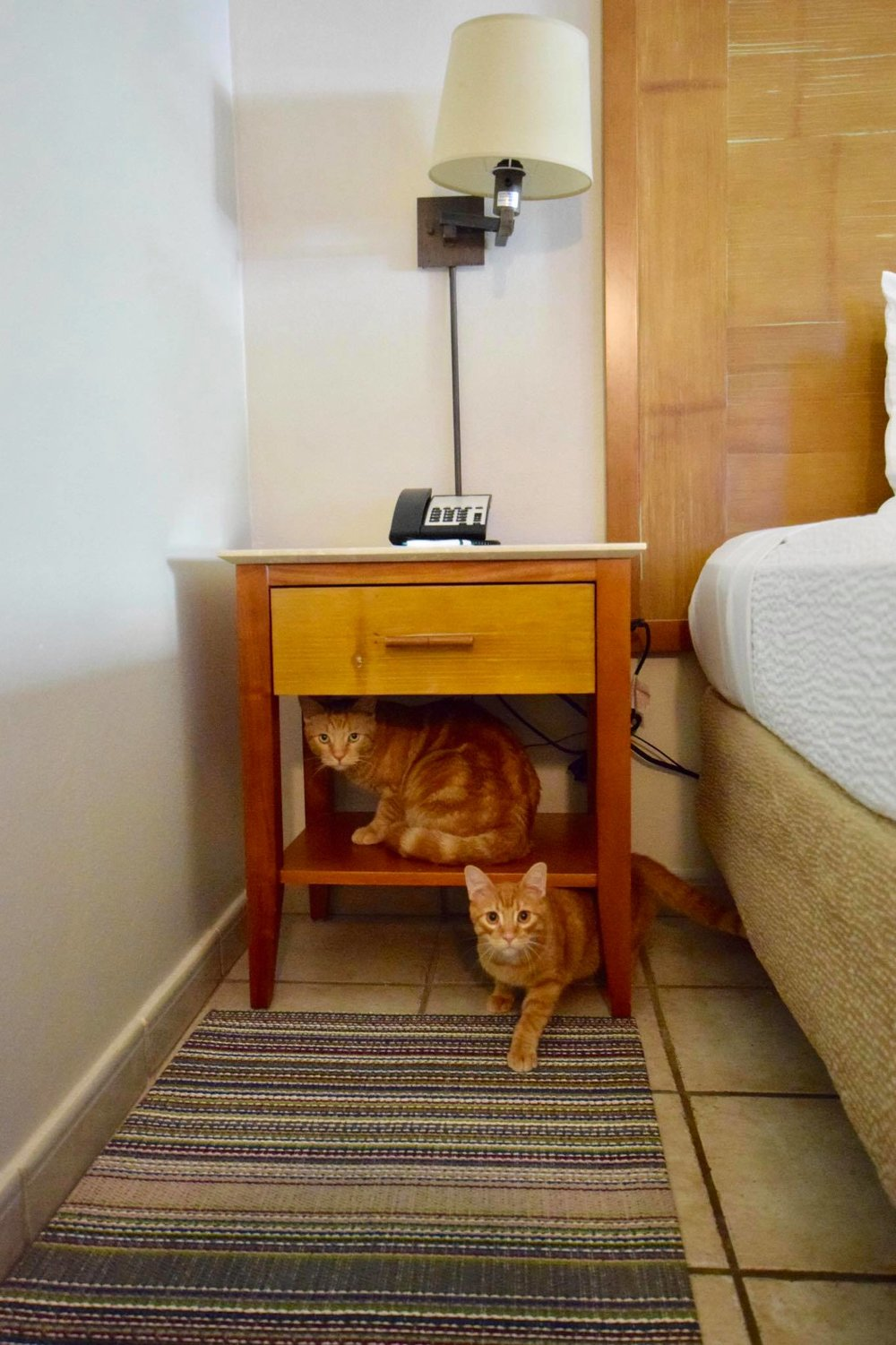 Sailing Life Day 322 Hotel Life of The Sailors Cats - Captain Ahab & Little Zissou's Luxury Staycation4.jpg