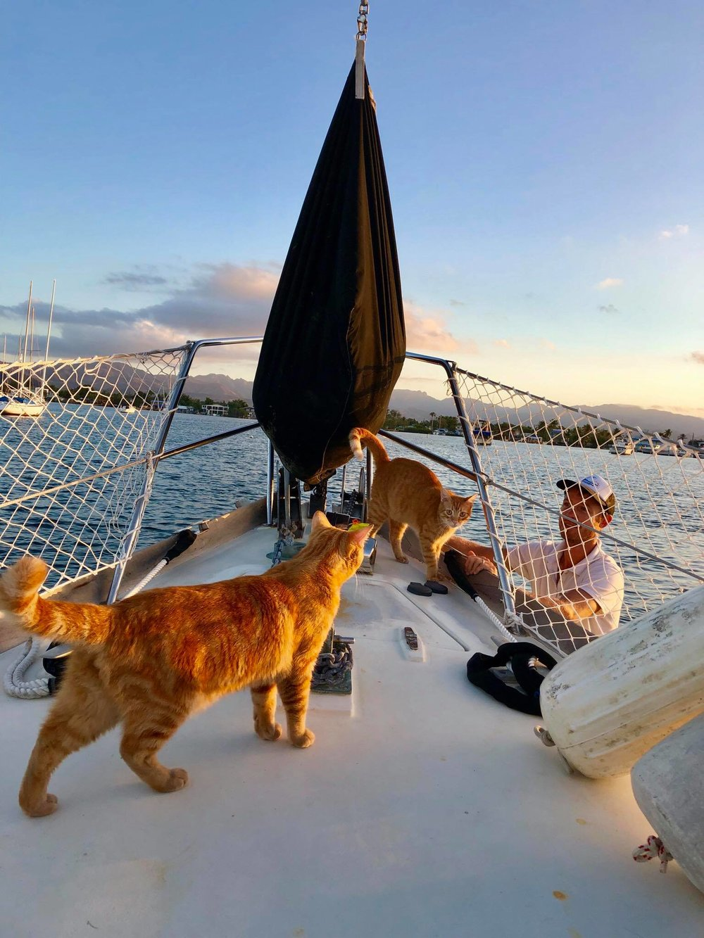 Sailing Life Day 401 Visited the veterinarian for the two cats - Captain Ahab and Little Zissou2.jpg