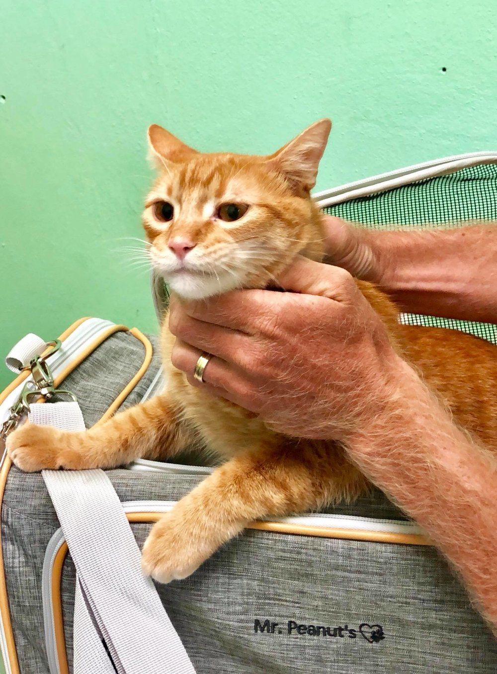 Sailing Life Day 401 Visited the veterinarian for the two cats - Captain Ahab and Little Zissou7.jpg