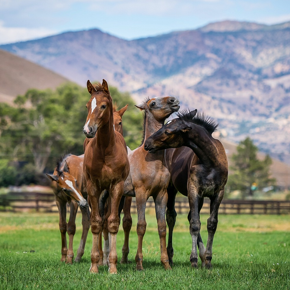 Maplewood's 2016 foal crop
