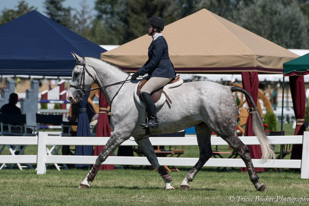 A beautifully turned out equitation rider and horse in competition.