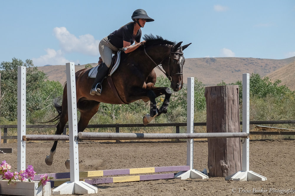 Quintus at the 2017 Young Horse Trainer School
