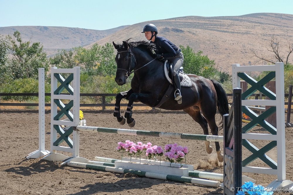 Sage in the 2017 Young Horse Trainer School with Linda Allen