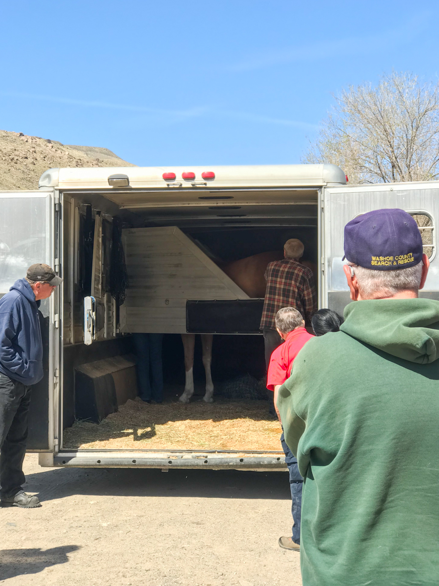 Clinic attendees observe the proper loading of a horse into a trailer.