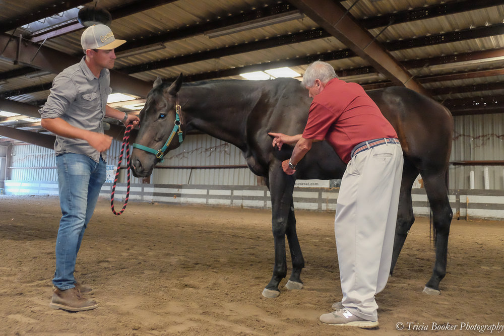 Show Jumping Hall of Fame member and veterinarian Danny Marks teaches during the Sport Horse Conformation Seminar.