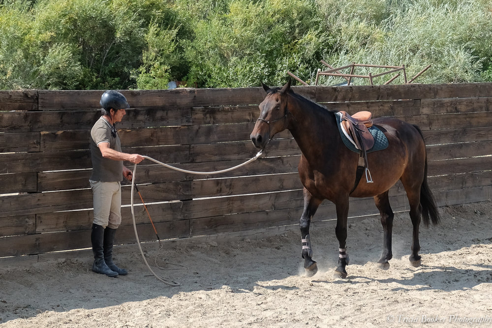 Clinician Mauricio Benavente teaches during Young Horse Trainer School.