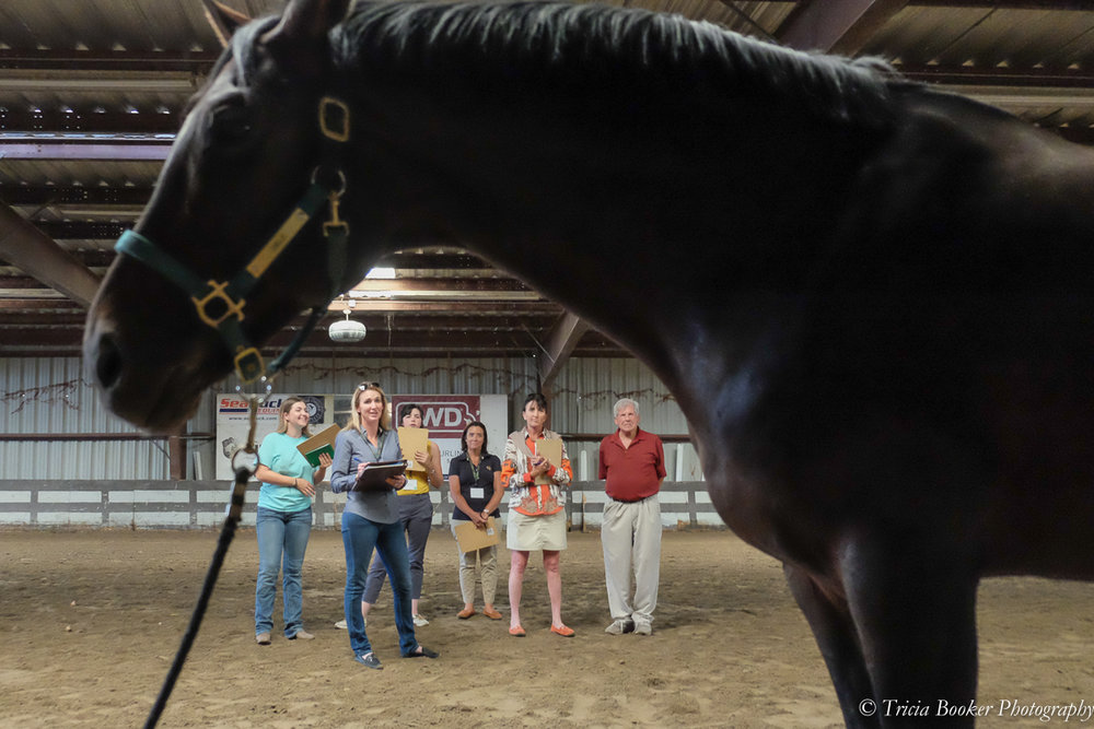 Julie Winkel and Danny Marks at the Sport Horse Conformation Seminar