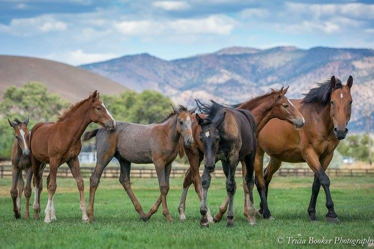 Maplewood's future sport horse stars by Cartouche Z and Osilvis
