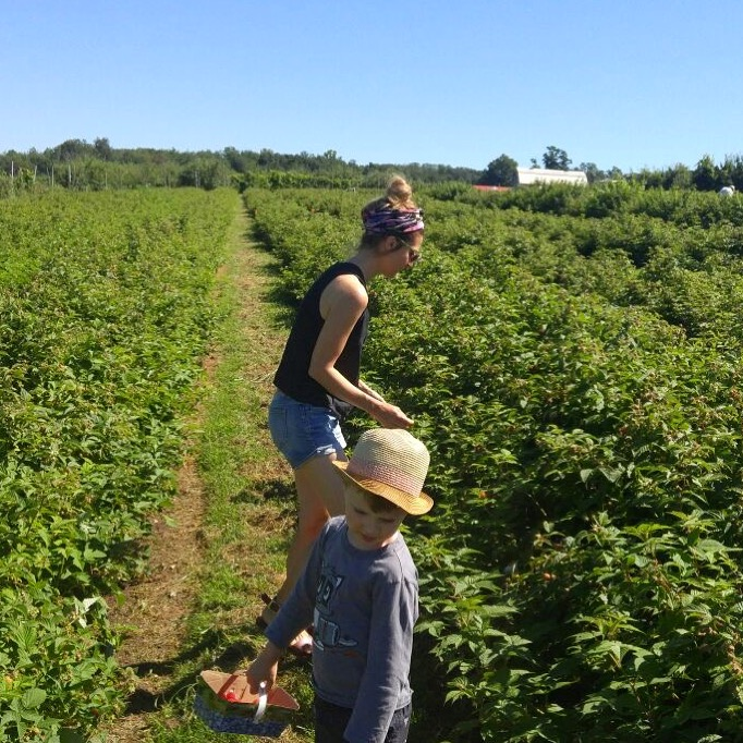 Raspberry bushes @ Au Paradis des Fruits farm, Dunham, Qc