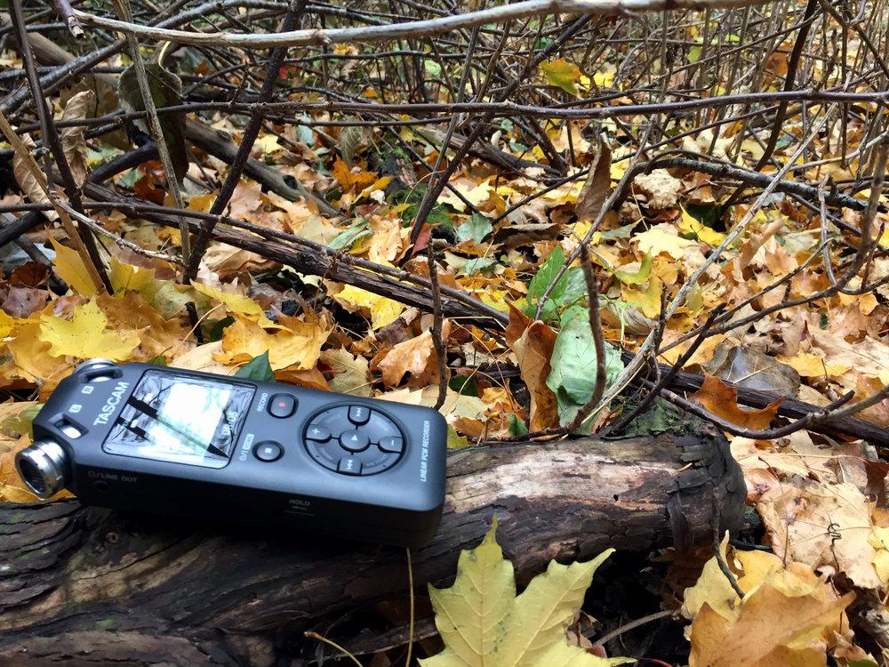 Tascam_woods.jpg