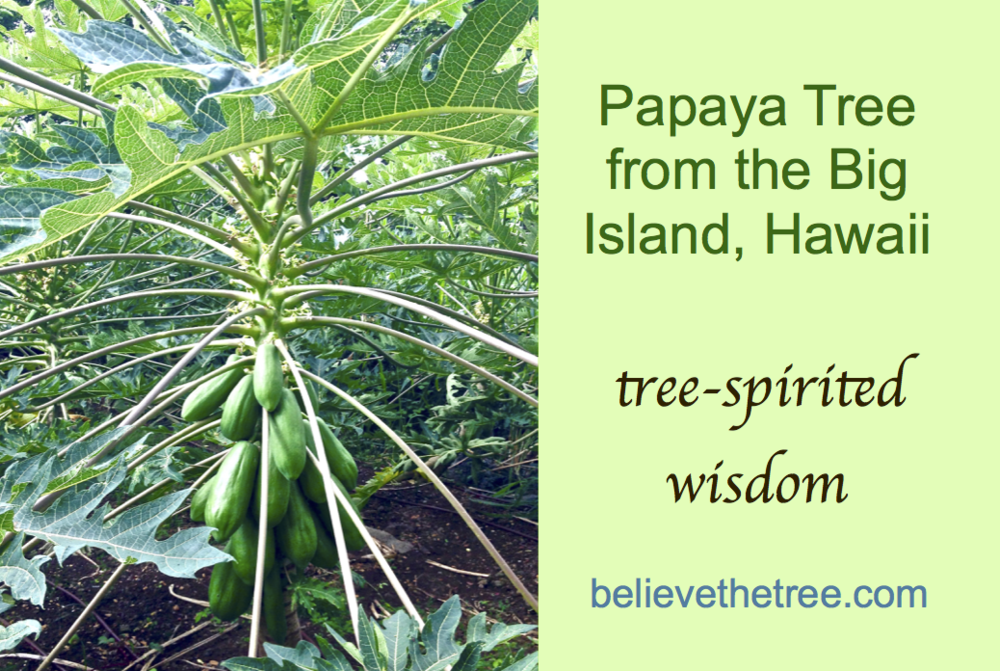 Papaya Tree Deck Affirmation Cards