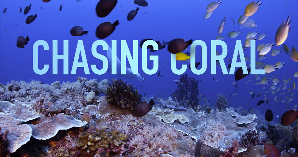 chasing_coral1000.jpg