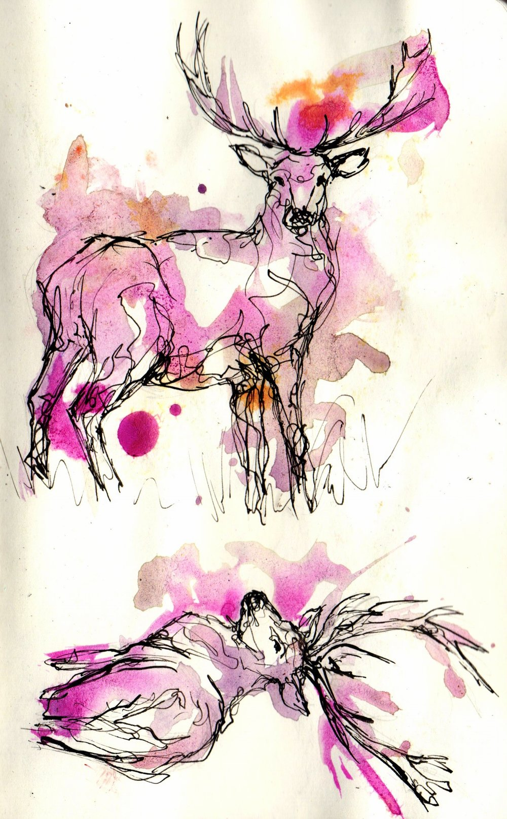 deer106.jpg