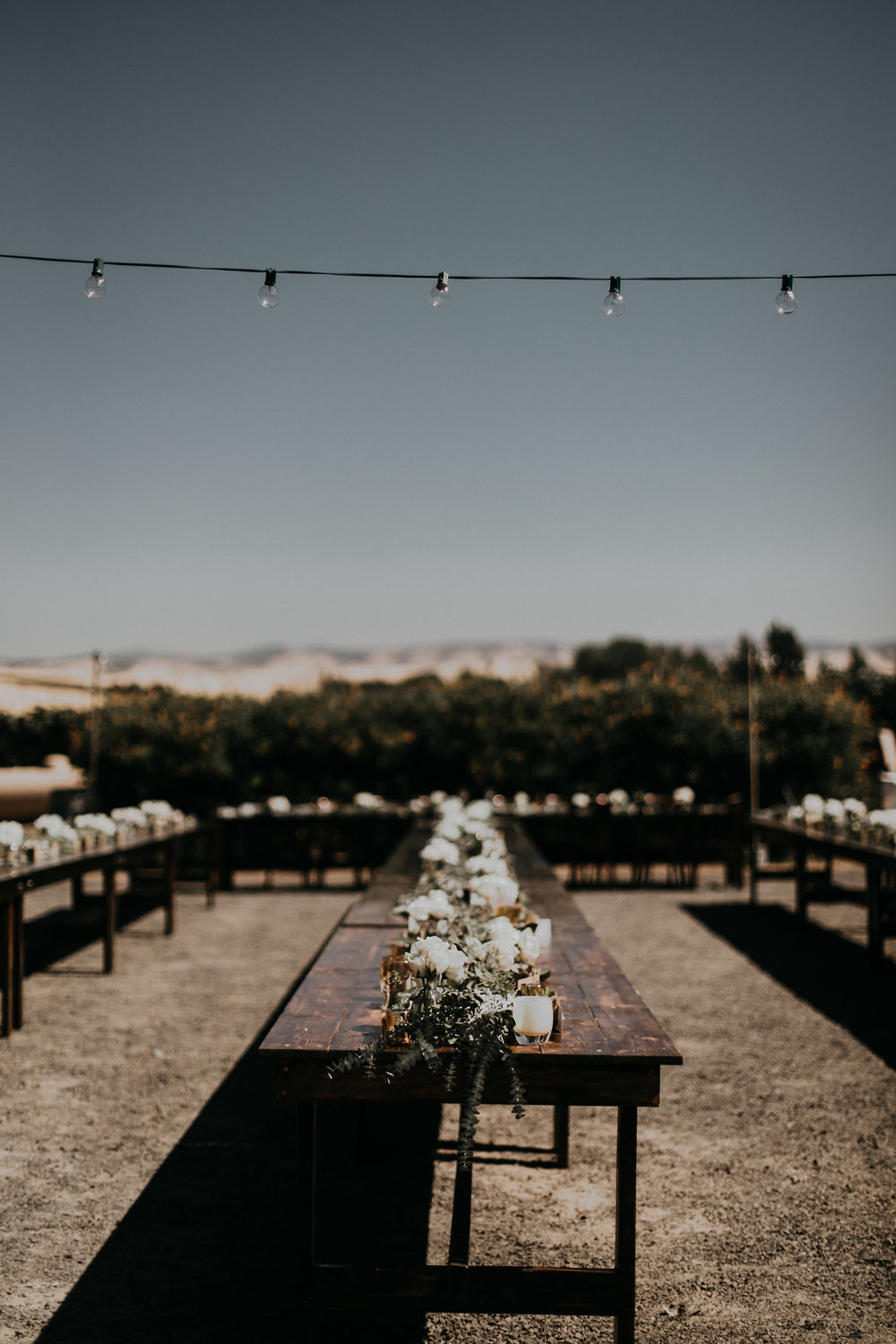 Ashley_Craig_Amourice_Vinyard_Wedding-247.jpg