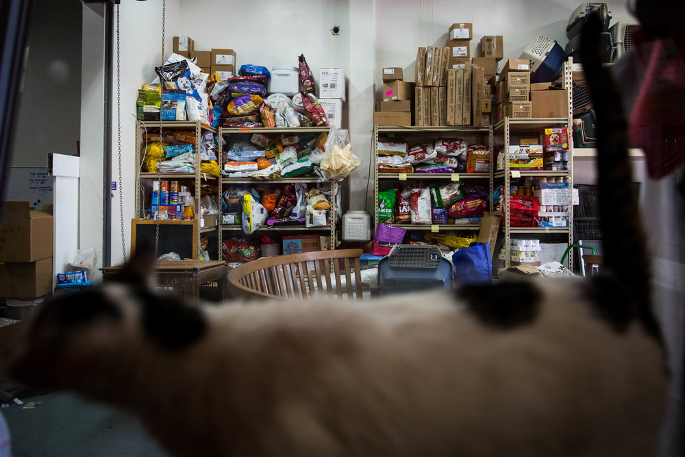 Pet food sits on the shelf in the front lobby of the adoption center, much of which was donated by volunteers and community members after wildfires broke out up north in early October, according to staff member Angel Wiley.