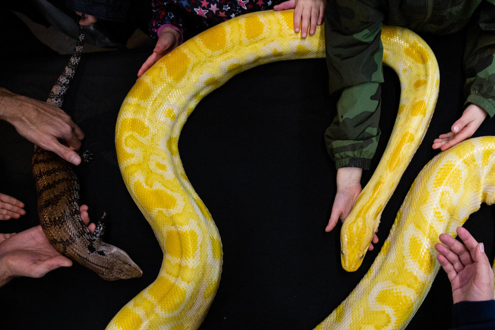 Event-goers interact with reptiles during Reptilian Nation Expo held at Cow Palace in Daly City, California, on Saturday, Feb. 9, 2019