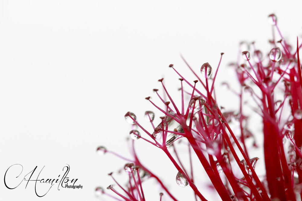 Flowers2 WM.jpg