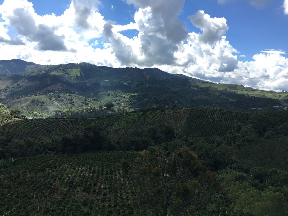 colombian coffee farm