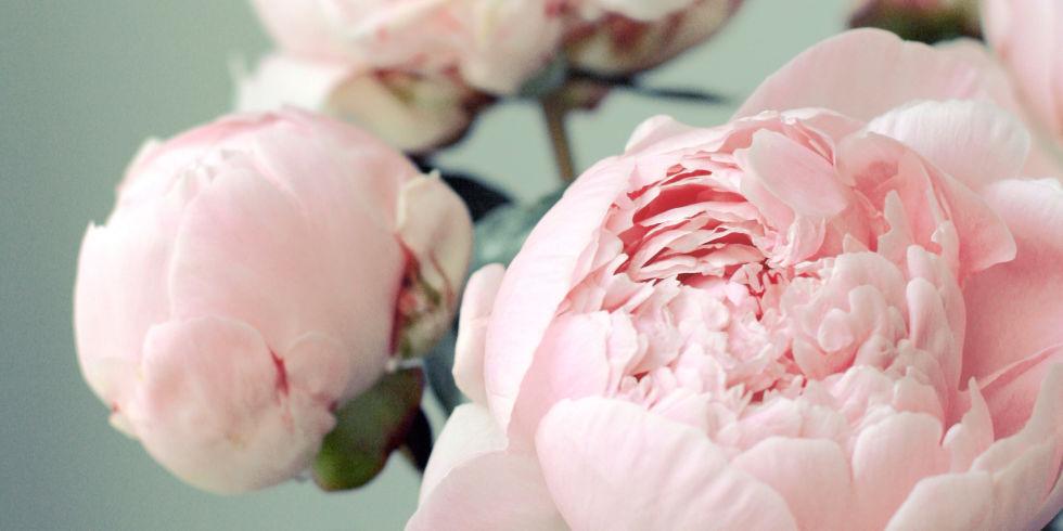 CUT FLOWER TRADER-website design {in process}