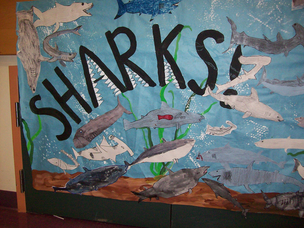 Shark Bulletin Board