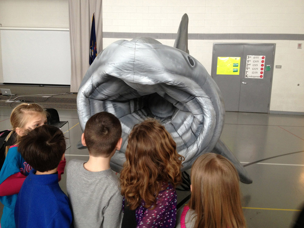 Basking Shark Mouth