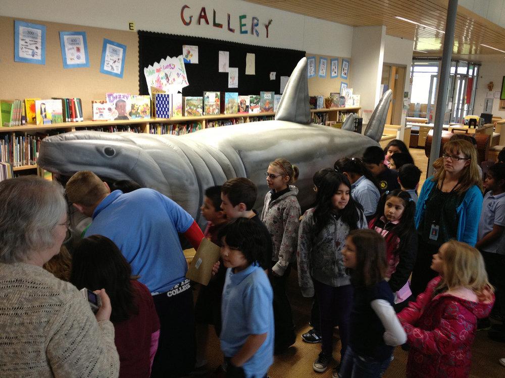 Library Shark