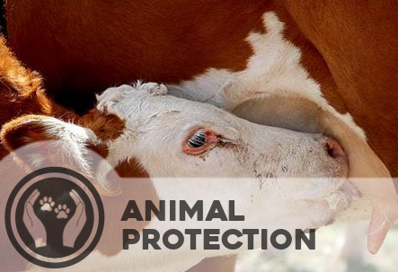 Animal protection - Every living being is equal in a spiritual sense. Therefore all living beings, not just humans, should be given shelter and protection.