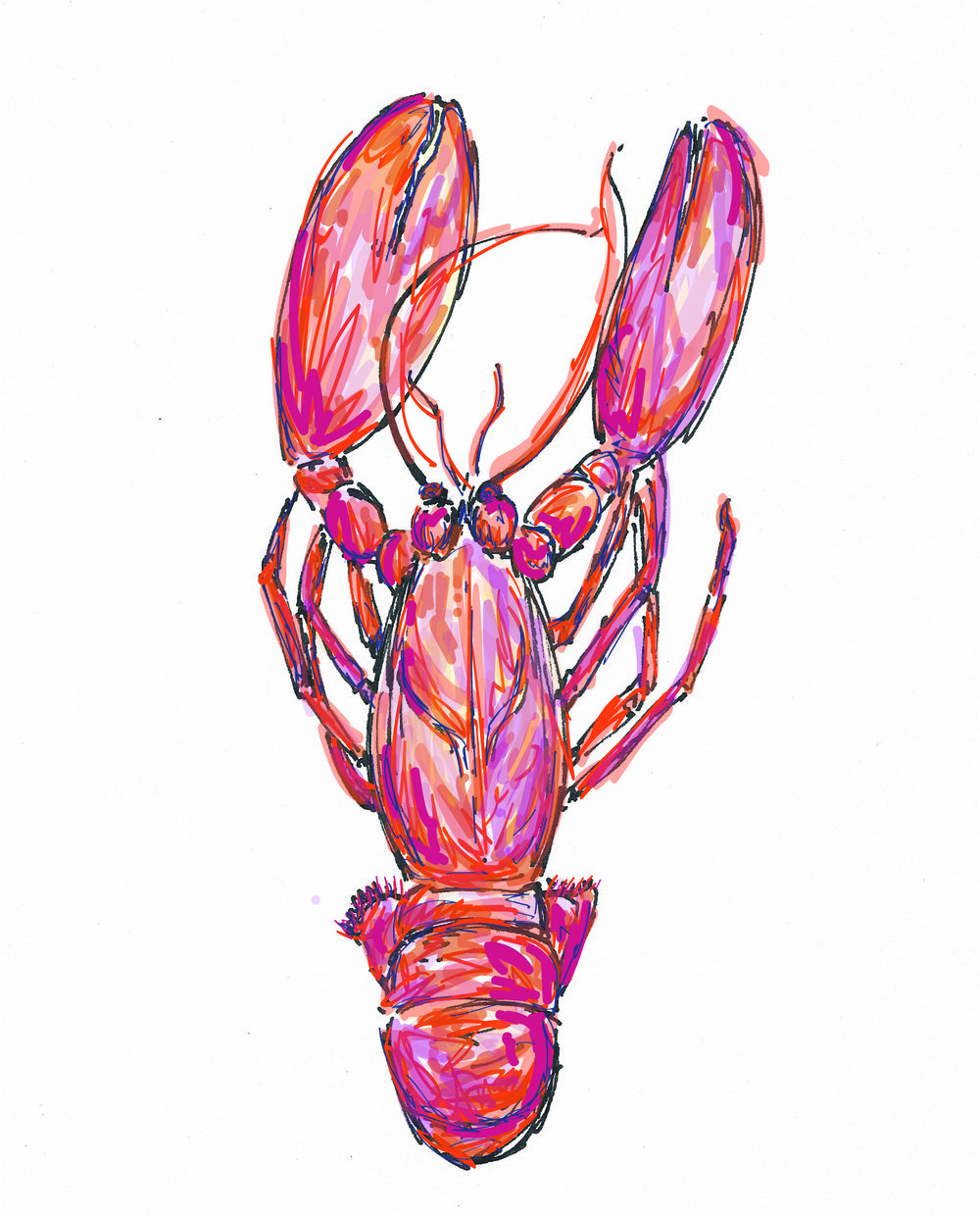 lobster colour website.jpg