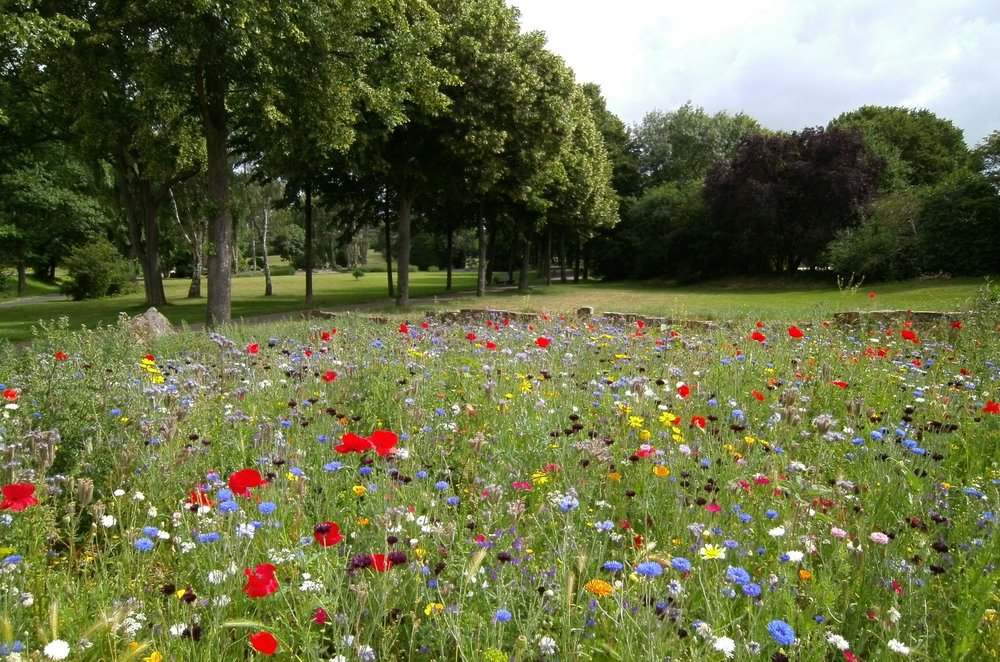 flowers-park-field-outdoors-pexels-photo-570041.jpeg