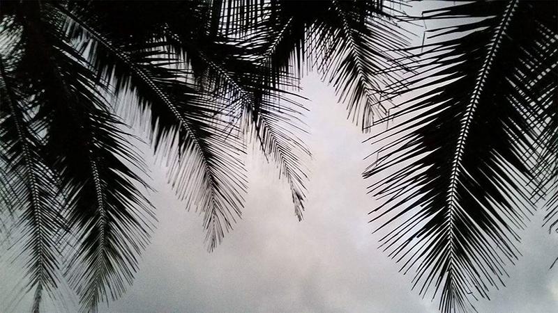 ciel-nuages-palmiers-sri-lanka-magali-paris