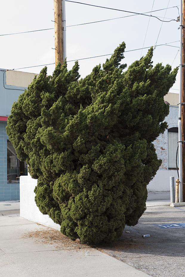 Douglas Hill, Los Angeles, CA
