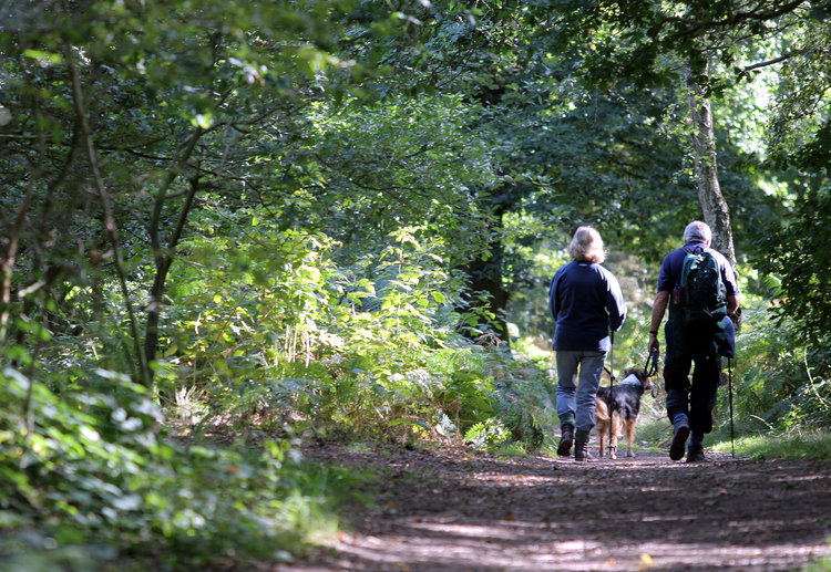Sherwood+Forest+couple+with+dog+on+path+(1).jpg