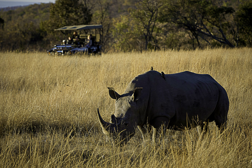 Rare Earth_Welgevonden_Game Drive_06.jpg
