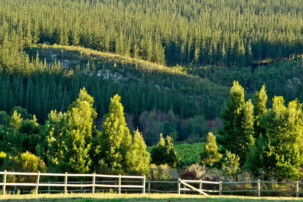 Rare Earth_Country House_Area_HR_RGB_00022.jpg