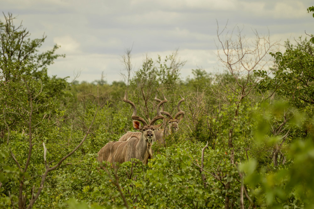 HIDDEN MYSTERIES: This is the wildest and most diverse part of the Kruger National Park but all you have to do is look and spectacular things will be revealed.