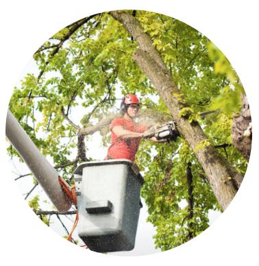 Tree service company in Poughquag NY