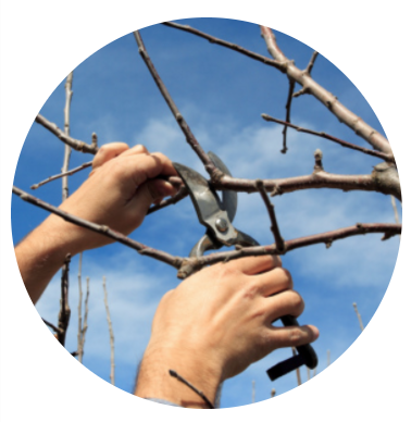 Tree service with tree pruning in Poughquag NY