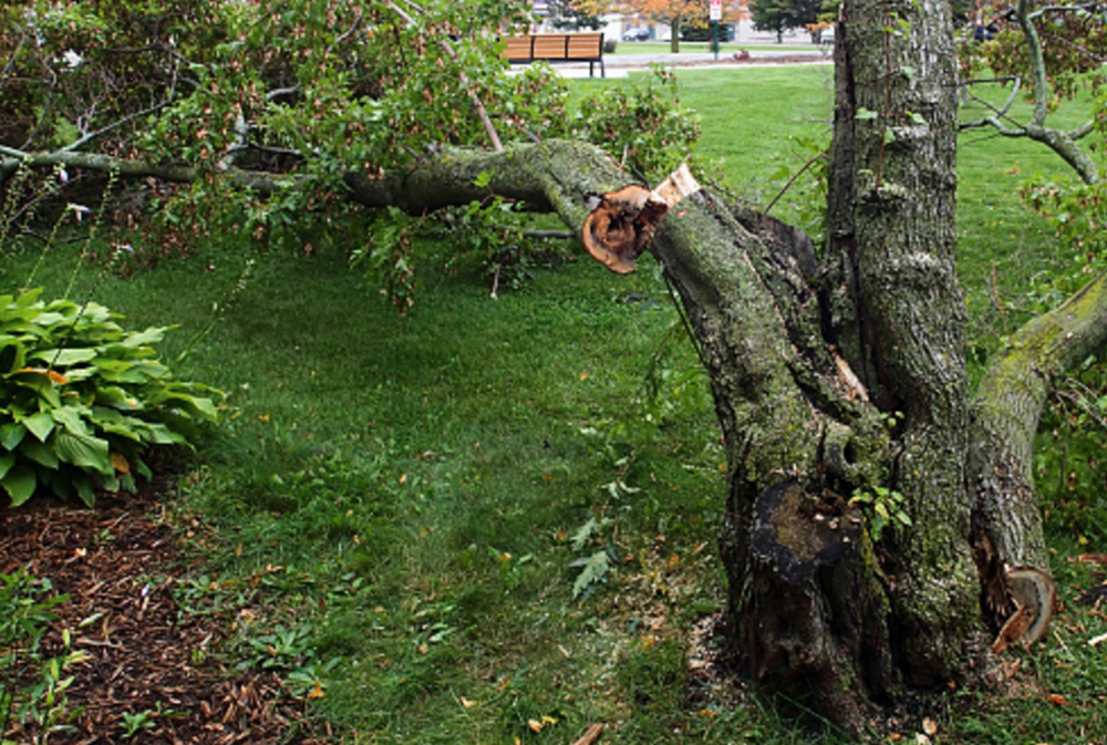 STORM DAMAGE TREE REPAIR IN HOPEWELL JUNCTION, NY AREA