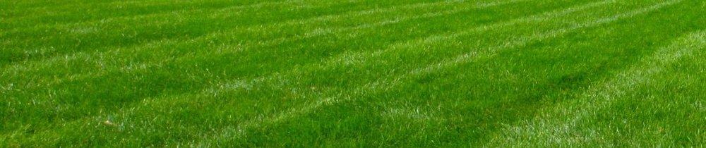 lawn_blog