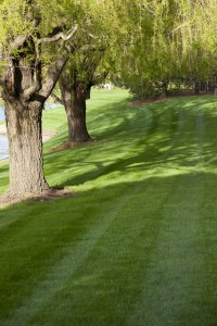 get shade in backyard with trees in wappingers and hopewell junction, ny