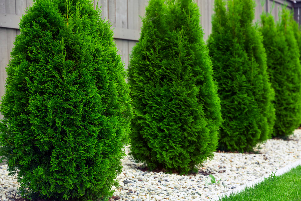 How Often Does My Evergreen Tree Need a Service in Fishkill NY?