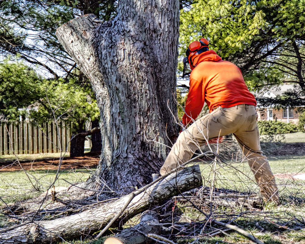 Remove Your Trees Safely and Efficiently with Professional Tree Service in Wappingers Falls, NY