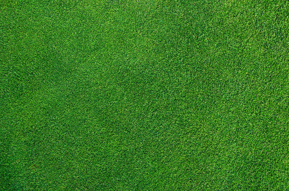Fight Crabgrass with Overseeding in Dutchess County, NY