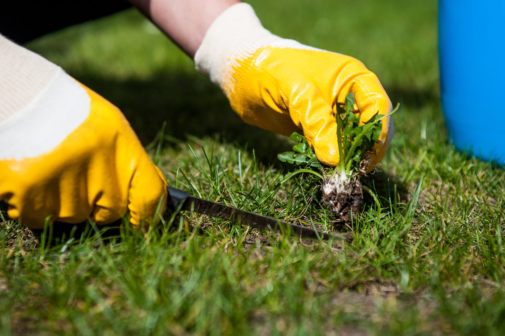 Weed Killer Tips for Dealing with Common Weeds in Wappingers Falls, NY